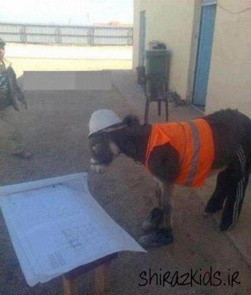 خر مهندس ؟؟!!(عکس جالب)