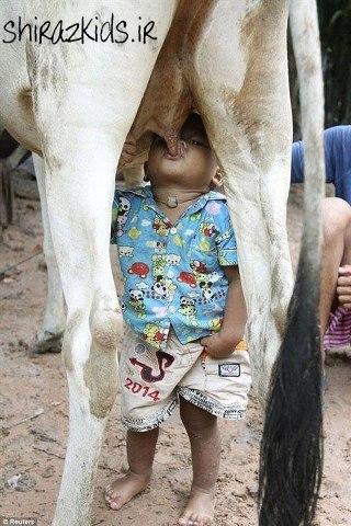 شیر خوردن از پستان ؟؟!(عکس)