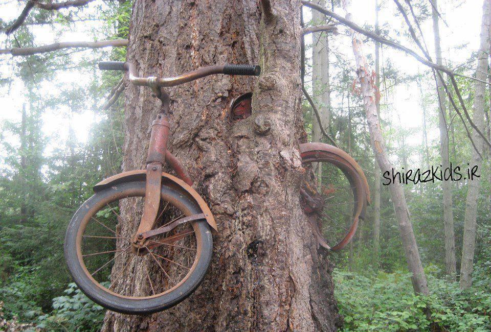 بلعیدن دوچرخه توسط درخت در گذر زمان!!(عکس جالب)